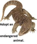 adopt-a-komodo-dragon1